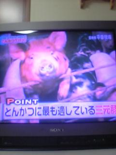 こわれかけのTV