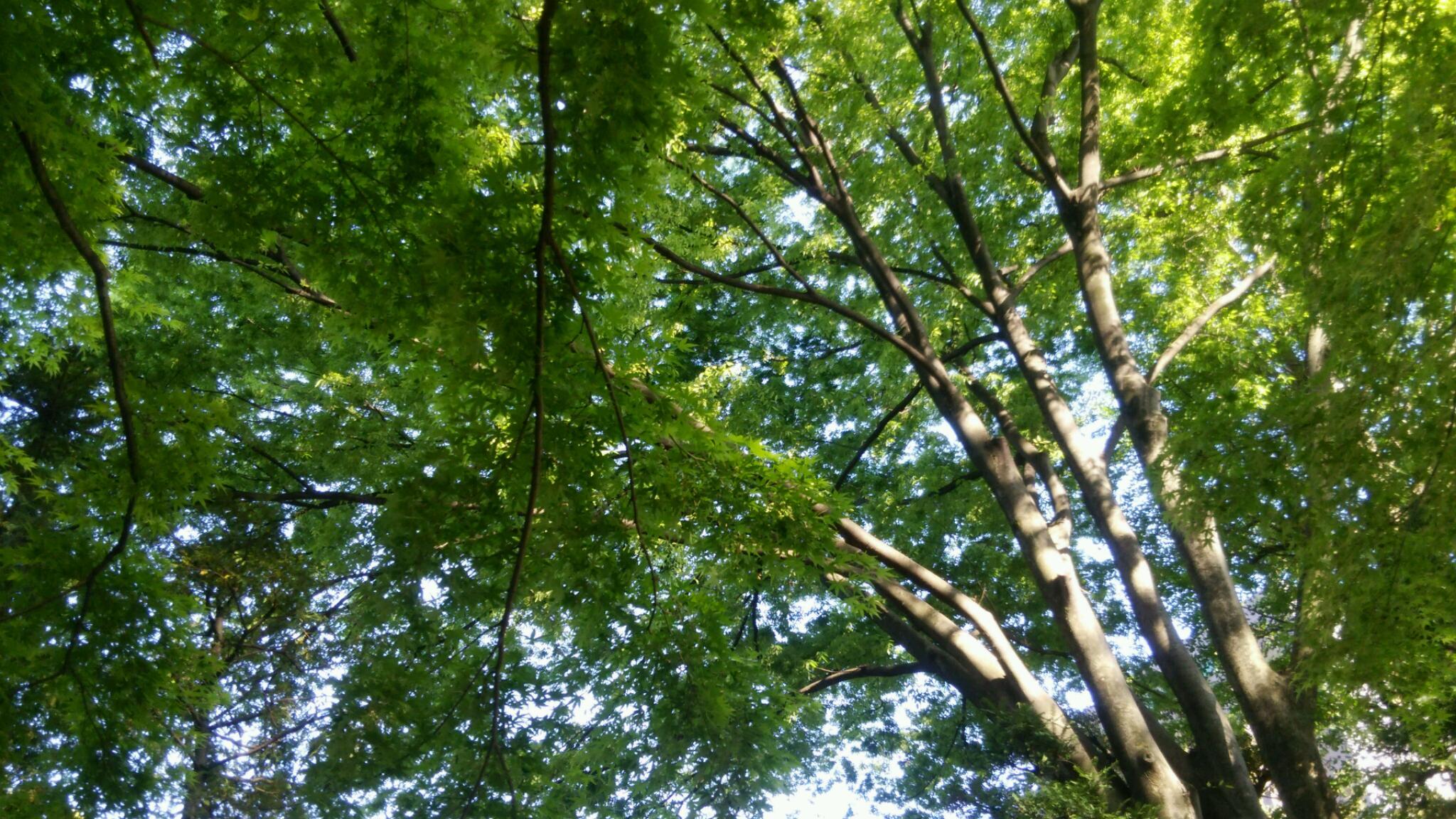 季節はかわり新緑。